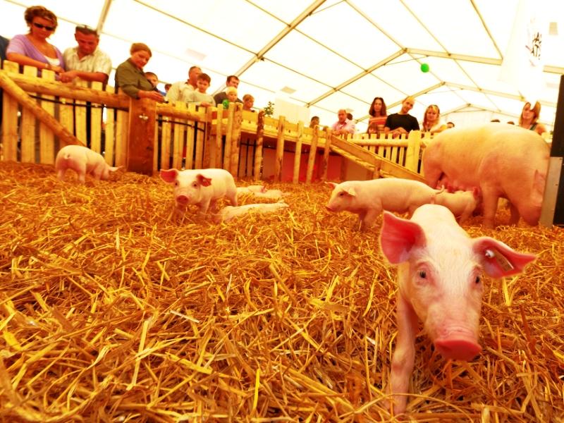Badenmesse 2012, Kinder,
