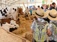 Baden Messe 2012, Freiburg, Tierzelt, Bild, Foto, news, 11.9.2012,