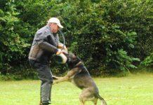 Polizeihunde, Wettkampf, Hundestaffel, Freiburg, Polizei, Bilder, Fotos