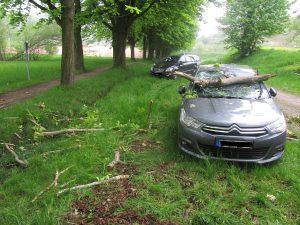 Polizeimeldungen aus dem Kreis Emmendingen, Waldkirch, Baum fällt auf Auto