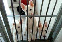 welpen bei tierheim freiburg ausgesetzt polizisten fanden die jungen hunde