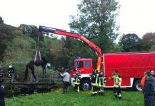 einsatz feuerwehr waldkirch pferd in suggental gerettet