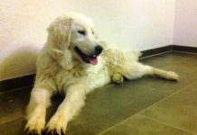 hund vermisst in freiburg