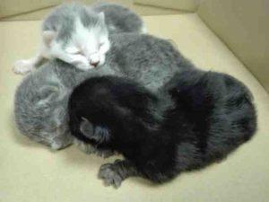 katzenbabys aufgefunden freiburg