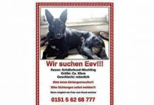 hund in freiburg littenweiler vermisst gesucht