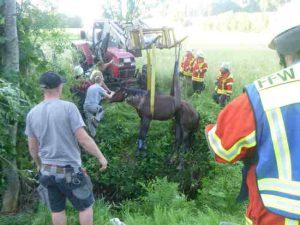 pferd aus graben gerettet