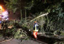 Orkan Sabine sorgt für umgestürzte Bäume in Waldkirch